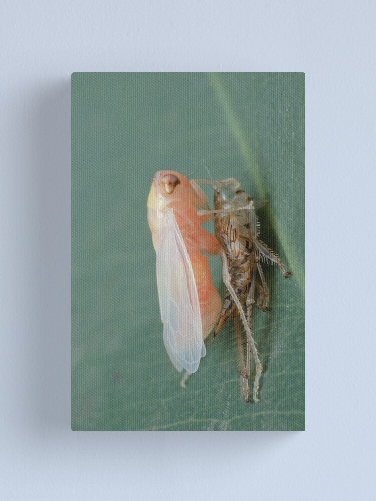 Alternate view of Yellow-headed Leafhopper Canvas Print