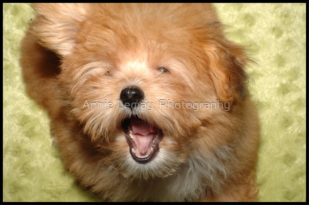 Yawn by Annie Lemay  Photography