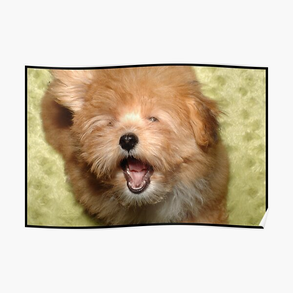 Yawn Poster