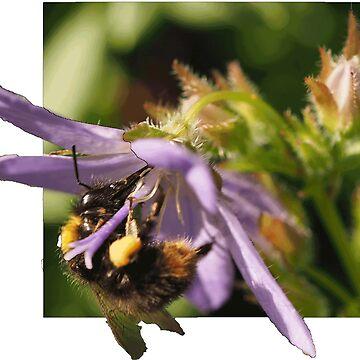 Fly bee by woolcos