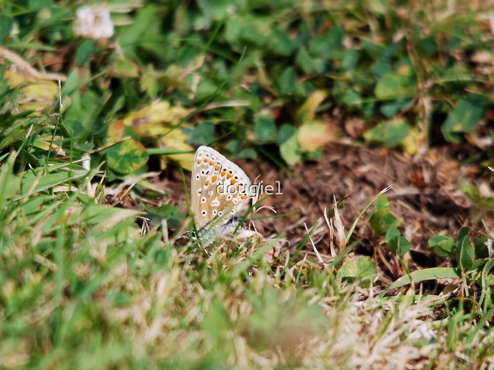 ?Butterfly? by dougie1