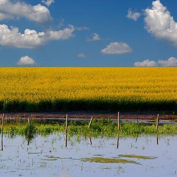 Canola Landscape by umpa1