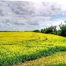 Canola Field by Larry Trupp