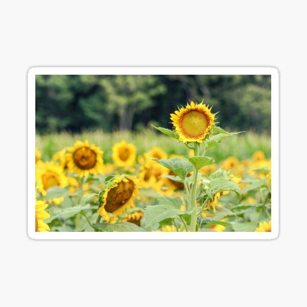 Lone Sunflower Sticker