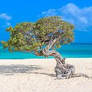 Blue Ocean & Divi Tree by Southern  Departure