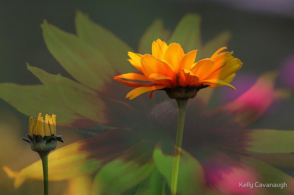 Heliopsis by Kelly Cavanaugh