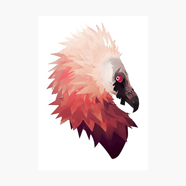 Bearded Vulture  Photographic Print
