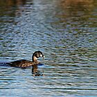 Pied Billed Grebe with Fish by Alyce Taylor