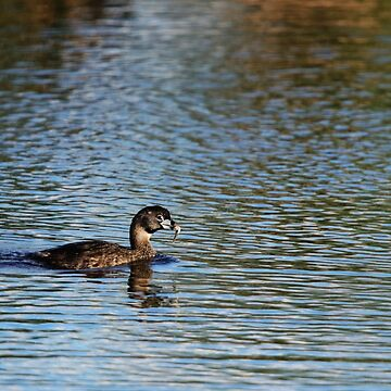 Pied Billed Grebe with Fish by alycetaylor