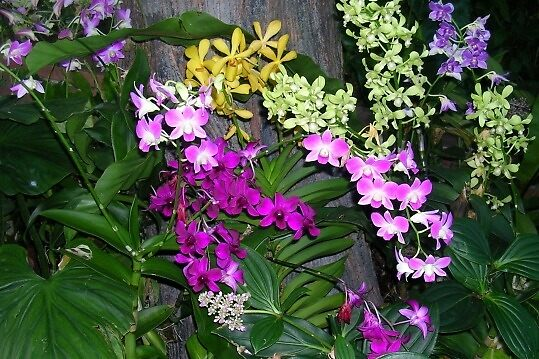 more singapore flowers by sharon wingard