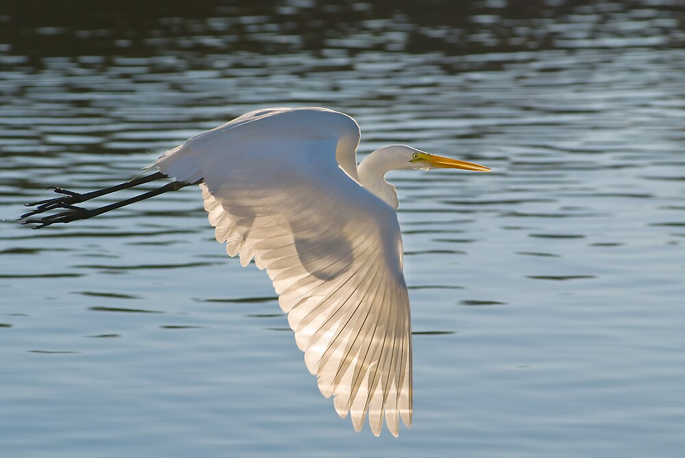 Egret and Sun by Leroy Laverman