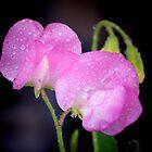 After The Rain............Lyme Dorset UK by lynn carter