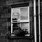 A CALLANDER WINDOW II by June Ferrol