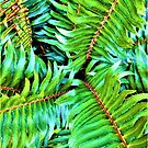 Forest Fern by EvePenman