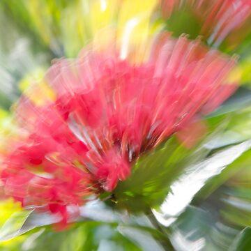Flower Burst - Electric Magenta by discreetpeacock