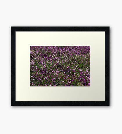The Color Purple Framed Print