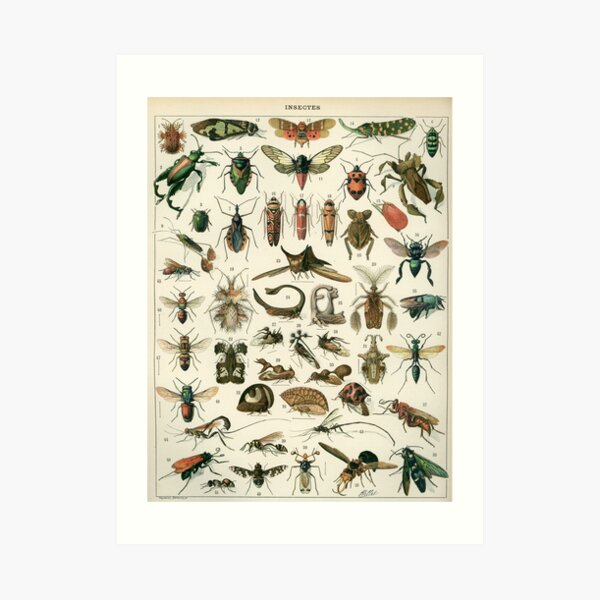 Insects 1 Art Print