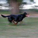 Run!!! by davenreef