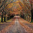 Autumn Laneway by WendyJC
