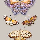 «Arte del patrón de acuarela de mariposa» de Ruta Dumalakaite