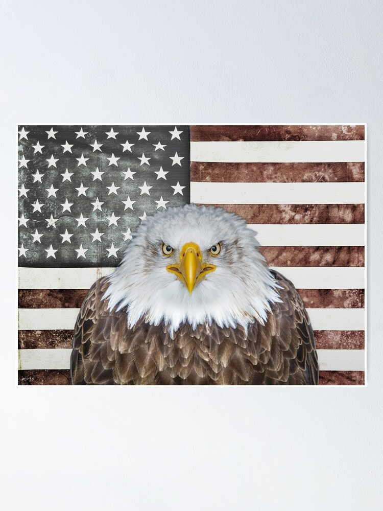 Alternate view of American Bald Eagle Patriot Poster