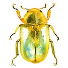 Gold Beetle by SamNagel