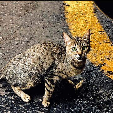 Urban cat by EVButterfly