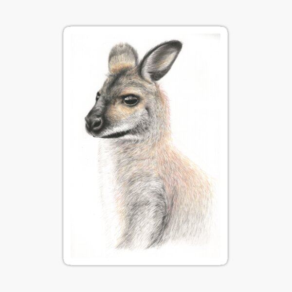 Chilled Wallaby Sticker