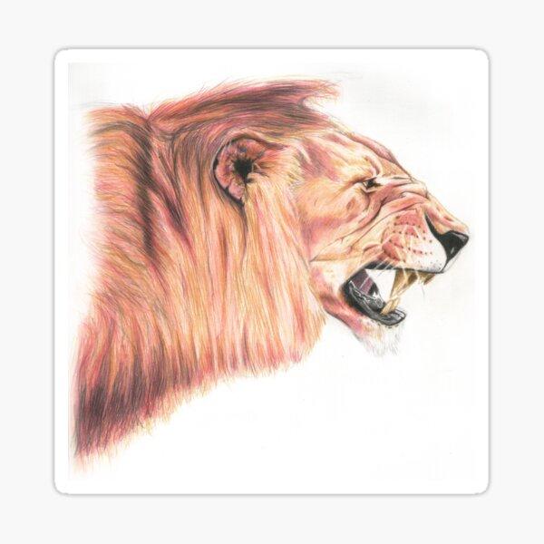 Snarling Lion Pencil Art Sticker