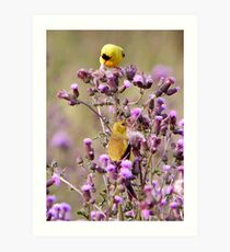 A Pair Of American Goldfinchs (Special Effects)  Art Print