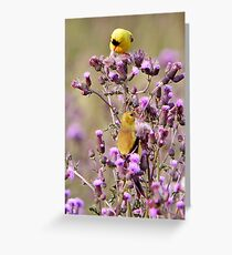 A Pair Of American Goldfinchs (Special Effects)  Greeting Card