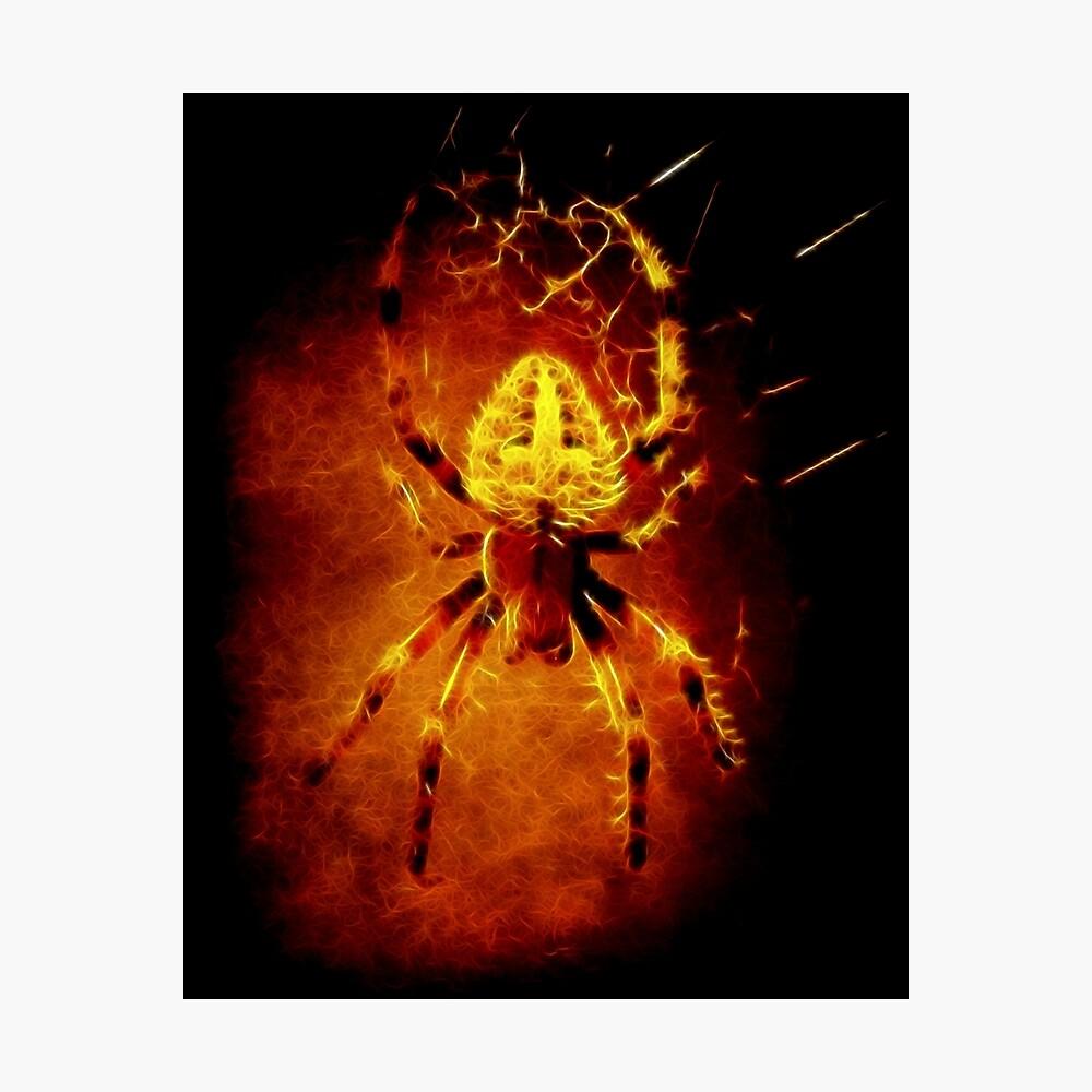 Spider Photographic Print