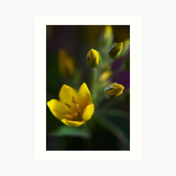 Yellow parade (from wild flowers collection) Art Print