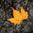 Leaf On The Street by Leonardo Ramos