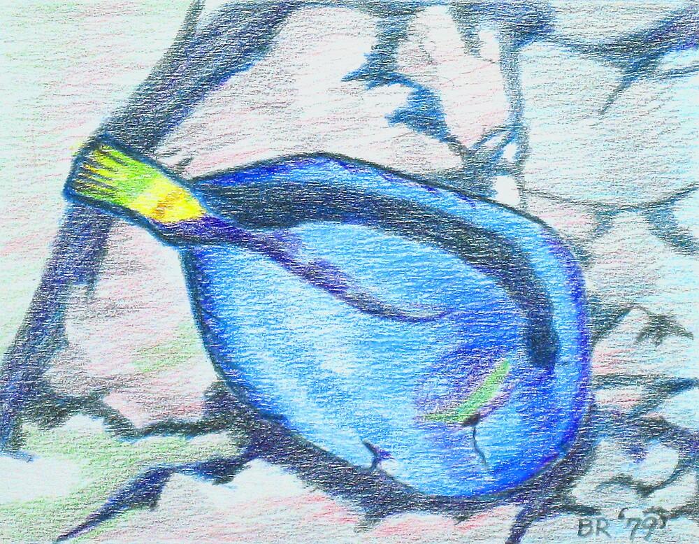 Blue Surgeon Fish by brisdon