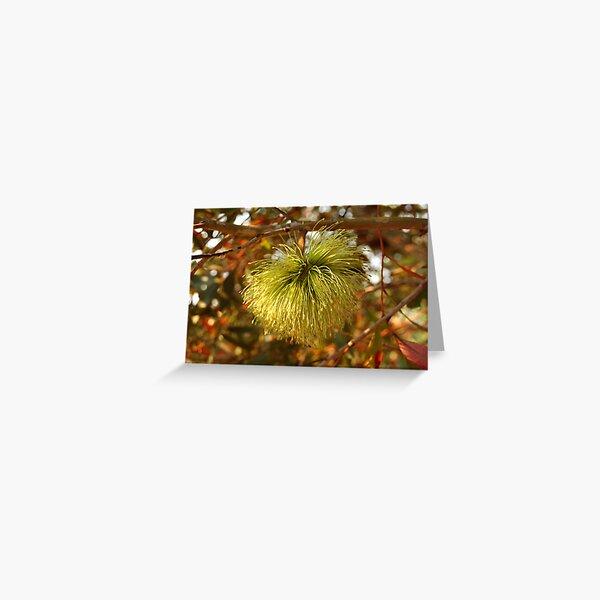 Eucalyptus lehmanni Greeting Card