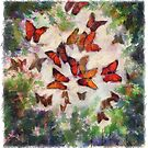 Sunny Day Butterflies by ButtercupSaiyan