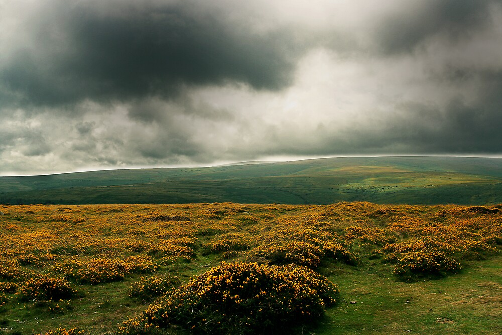 Dartmoor, UK by Hugh Adams