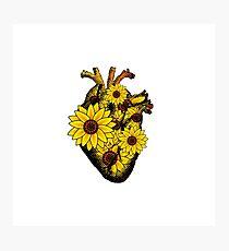 Summer Sunflower Heart  Photographic Print