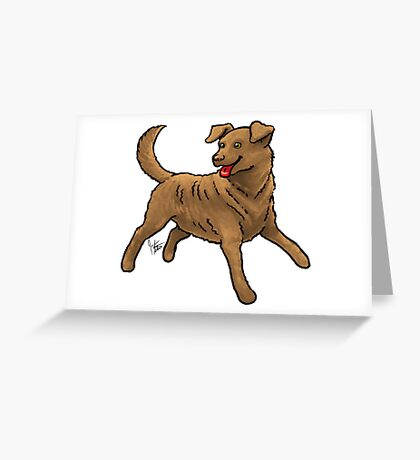 Chesapeake Bay Retriever Greeting Card