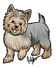 Yorkshire Terrier by Jennifer Stolzer