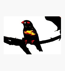 Zebra Finch on a bench Photographic Print