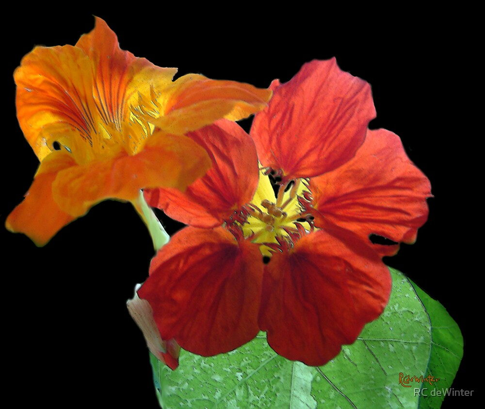 Flowers for Ebie by RC deWinter