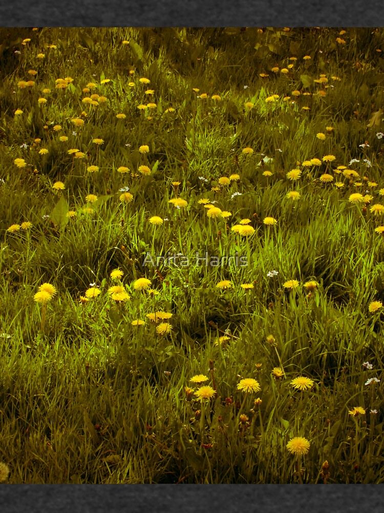 Dandelions by plasticflower