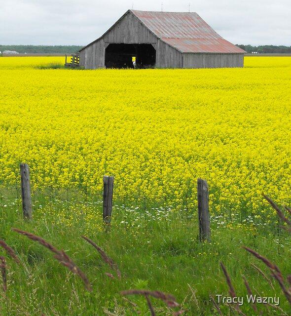 Fields Of Gold by Tracy Wazny