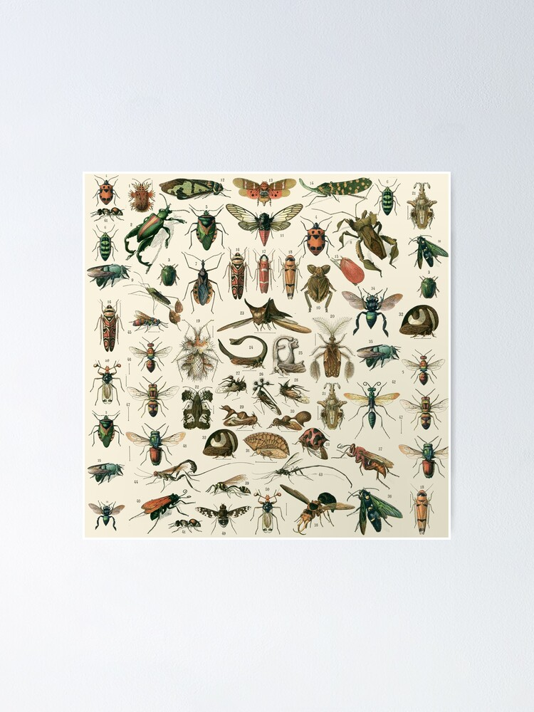 Alternate view of Insects 2 Poster