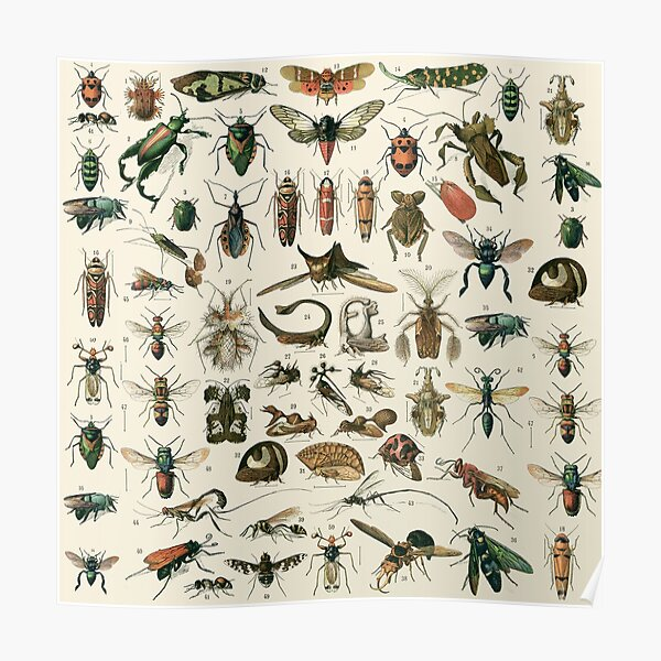 Insects 2 Poster