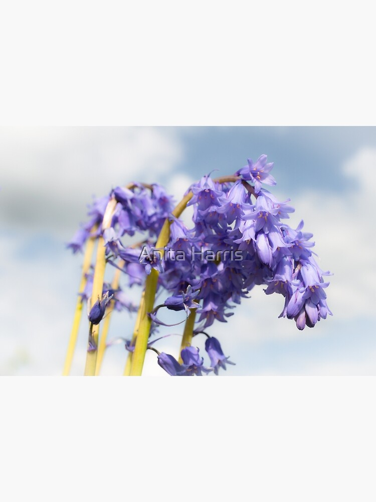 Bluebell by plasticflower