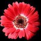 Red Garden Beauty by hurmerinta