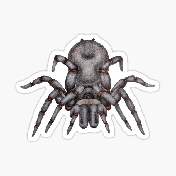 Sydney funnel web spider aka Atrax robustus Sticker